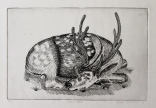 """Sika Deer"" Etching on Rives BFK 6"" x 9"""